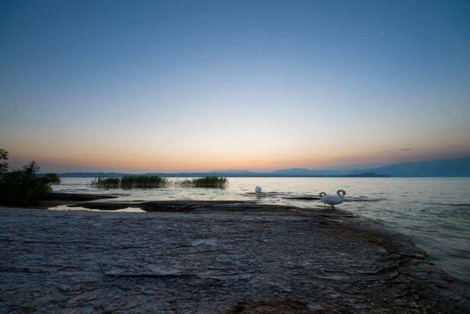 Cigni alle grotte di Marco Nalini (Mozzecane, VR)