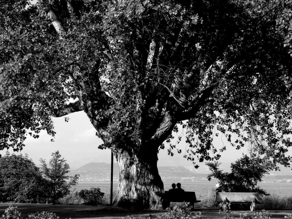 Il grande albero di Antonella Fila (Desenzano del Garda)