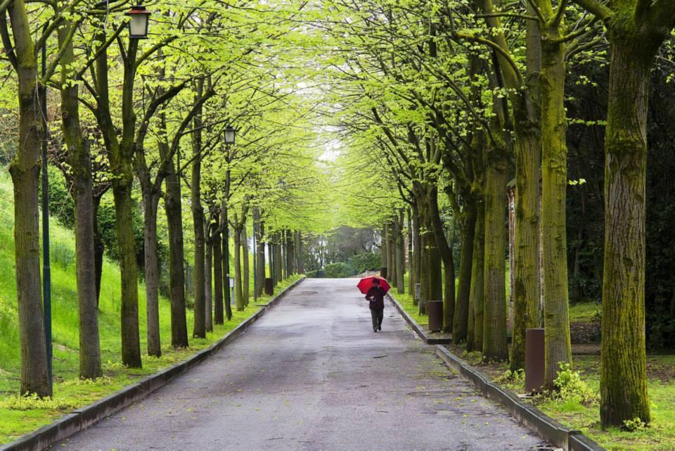 Il viale di Giovanni Brighente (Monteforte)
